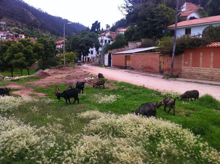 Avenida de las Americas sucre bolivia 5